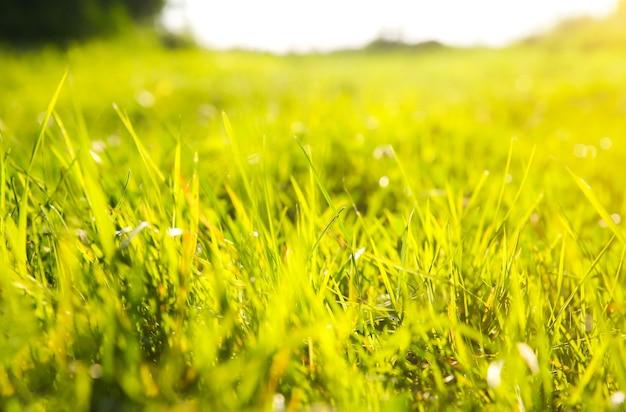 아름 다운 녹색 잔디입니다. 여름 분위기. 봄 기간. 식물에 태양 빛입니다. 자연의 아름다움.