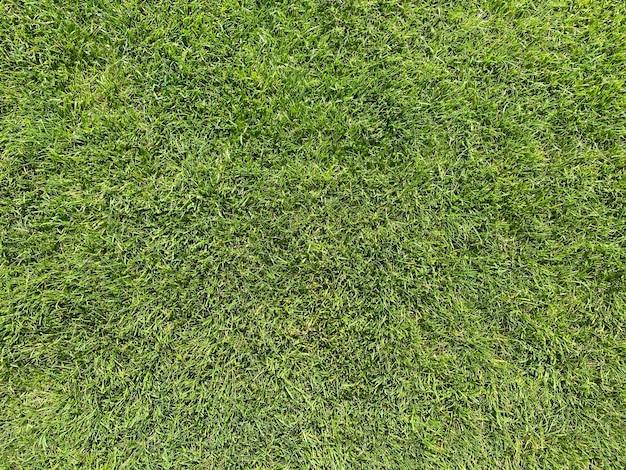 골프 코스에서 아름다운 푸른 잔디 질감
