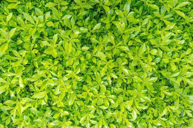 골프 코스에서 아름 다운 녹색 풀 텍스처