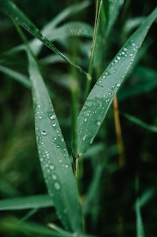 露と透明な雨水で美しい緑の芝生。季節のコンセプト-夏の朝。緑の質感の葉、自然のマクロに大きな滴。