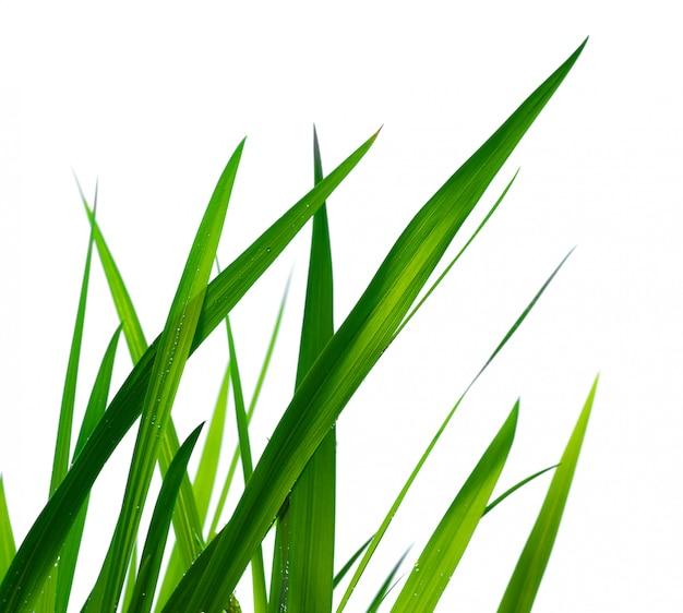 白い壁に分離された滴と美しい緑の芝生。閉じる。