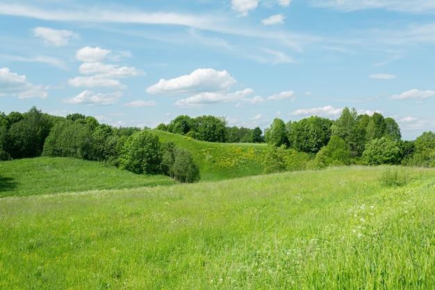 Красивые зеленые холмы псковской области, россия под солнечным светом в начале лета.