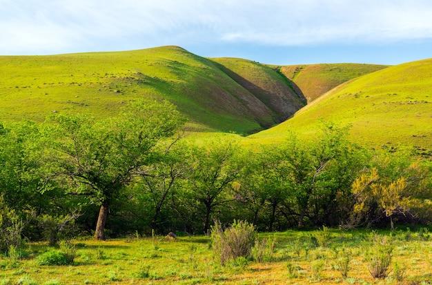 Beautiful green hills summer landscape