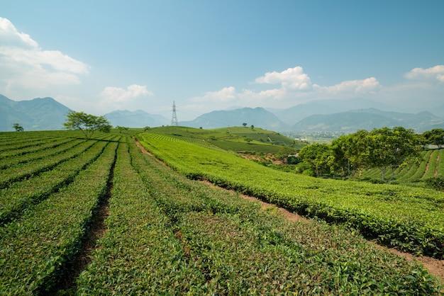 曇り空の下で高い山々に囲まれた美しい緑の風景