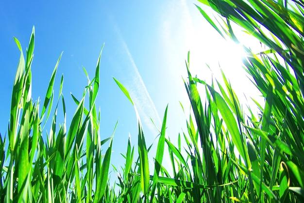 空に分離された美しい緑の芝生