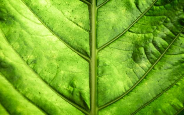 Макросъемка красивых зеленых листьев