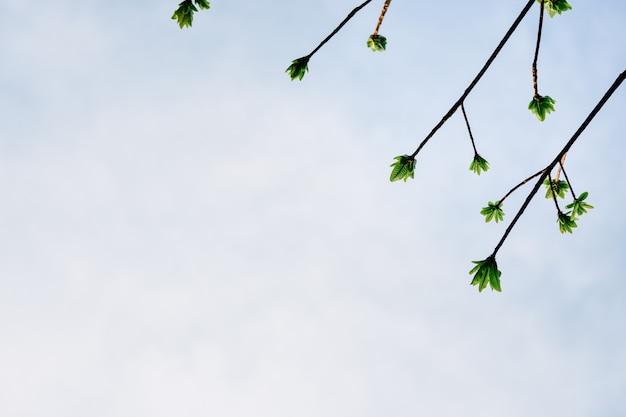 上空の背景の森で育った梢の美しい緑の葉。