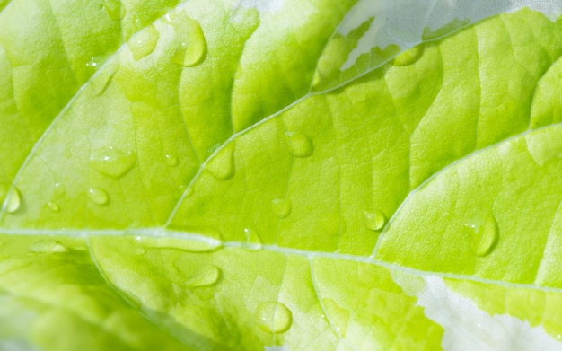 Beautiful green leaf and water drops in morning light background