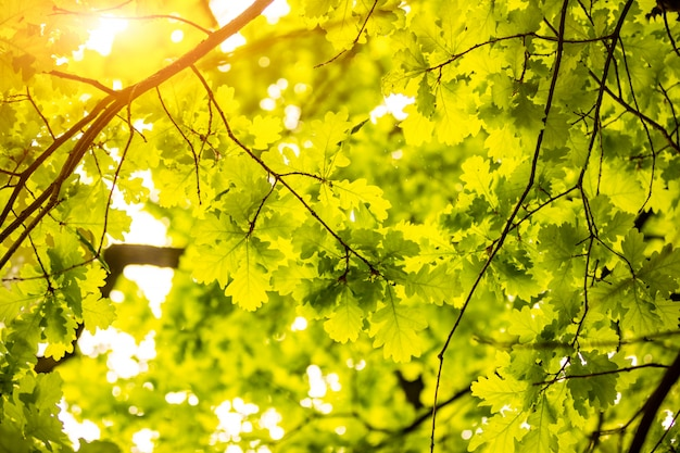 Beautiful green leaves and bright sun, nature wall