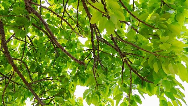 흰색 배경에 아름 다운 녹색 나뭇잎 프레임 여름 신선한 녹색 나뭇잎 배경입니다. 프리미엄 사진
