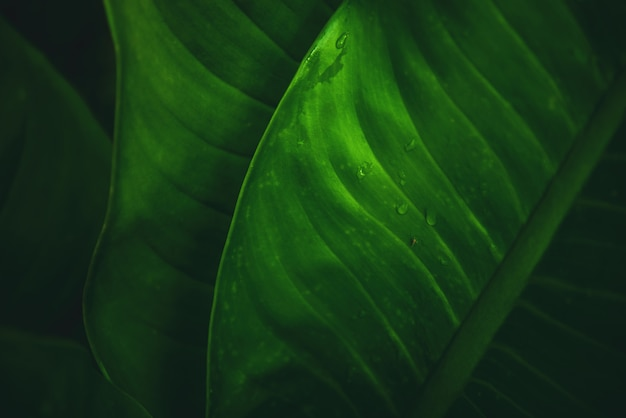 Beautiful green leaves pattern background and wallpaper.