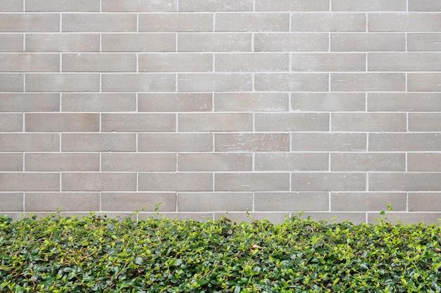 灰色のレンガの壁の壁と美しい緑の葉植物園