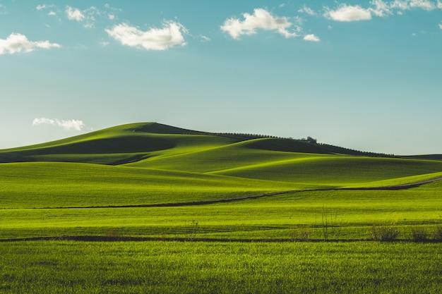 Beautiful green meadow located in cordoba