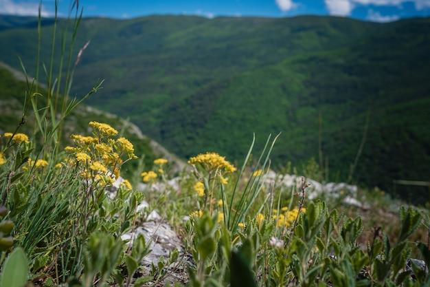 여름 시간에 아름 다운 녹색 산입니다. 백그라운드에서 로키 산맥과 데이지와 야생 꽃의 필드입니다. 러시아 크림 반도의 소콜리노에 마을 위 바르스카야 폴리아나