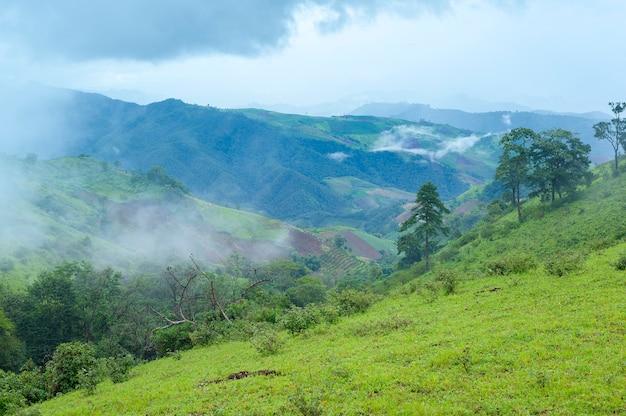雨季、熱帯気候の美しい緑の山の景色
