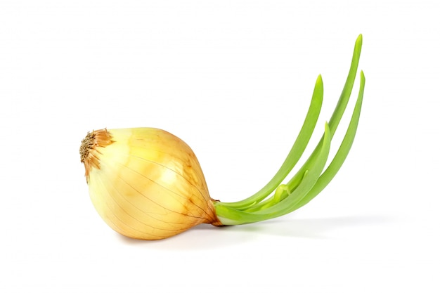 Beautiful green onion isolated on white with clipping path