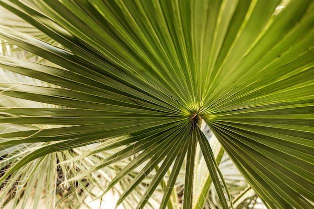 美しい緑のヤシの葉が白い壁の背後にある熱帯の場所で野生に成長