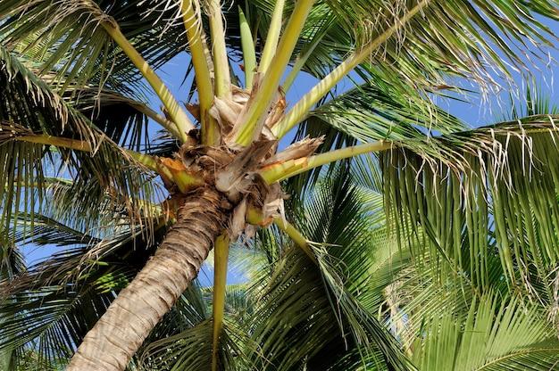 Красивая зеленая пальма на фоне голубого неба