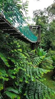 Красивый зеленый парк с канатными дорогами. уголок дикой природы в современном городе