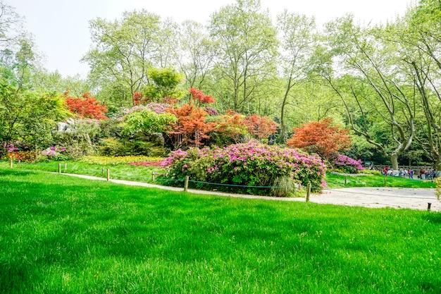 Bellissimo parco verde