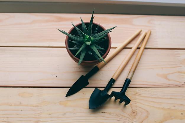 暗い木製の背景にある美しい緑の植物とガーデンツールとポットで働くためのツール