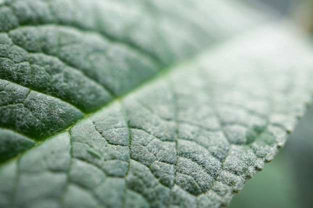 Beautiful green plant leaves in the garden