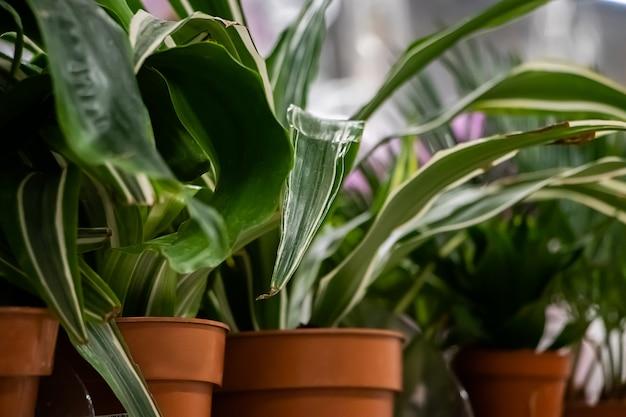 냄비 클로즈업에 아름 다운 녹색 식물입니다.