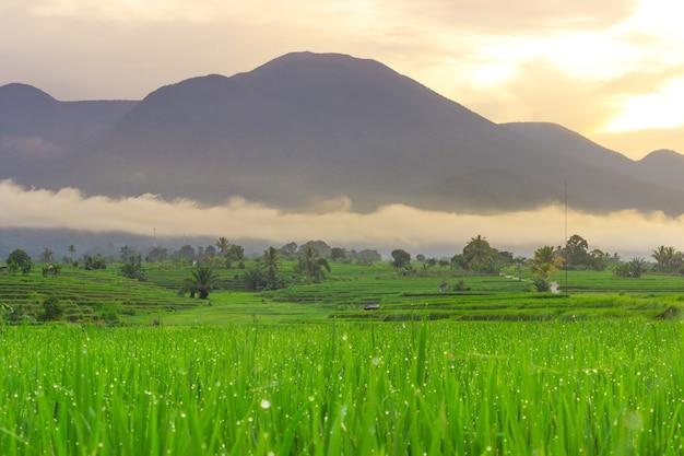 Bengkulu, 인도네시아, 아시아의 아름다운 산맥이있는 아침 이슬이있는 아름다운 녹색 논