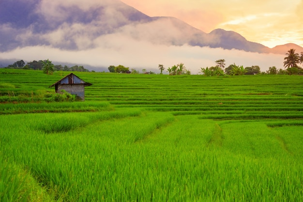 Beautiful green rice fields with sky sunrise in the morning with beautiful mountain ranges in bengkulu, indonesia, asia