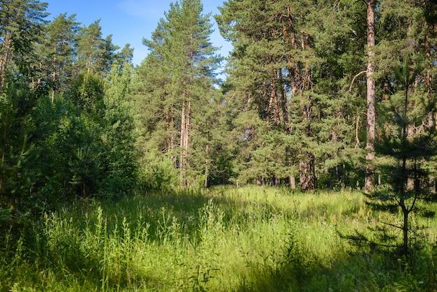 Красивый зеленый летний лесной пейзаж с поляной в солнечный день