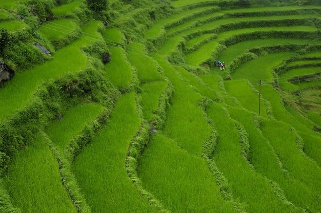 日中のネパール、ヒマラヤにある美しい緑の棚田