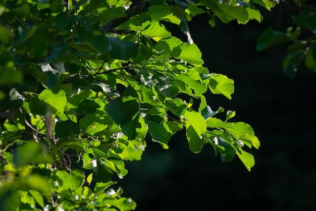 Красивые зеленые листья деревьев подсвечиваются утренним солнцем.