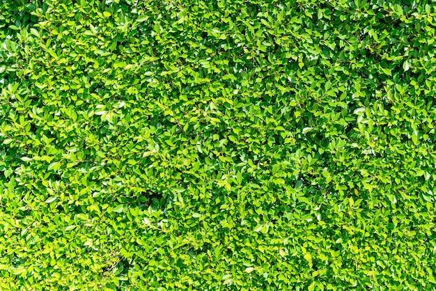 背景のコピースペースと美しい緑の木の壁のテクスチャ