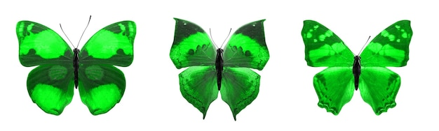아름 다운 녹색 열 대 나비 절연입니다.