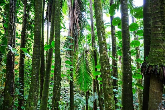 美しい緑の熱帯のジャングル