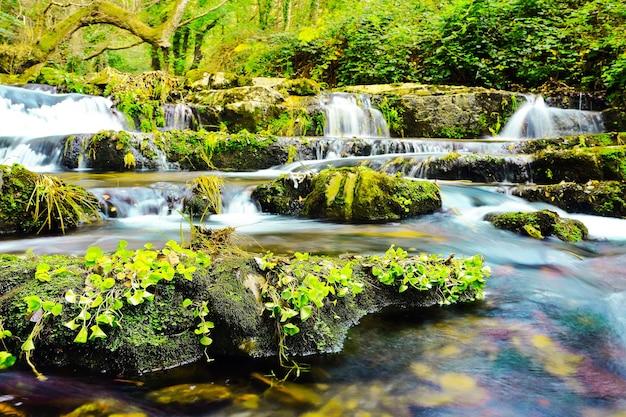 Красивая зелень, вид на небольшой водопад, озеро с большими камнями, покрытое мхом jungle.jpg