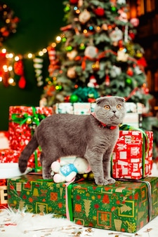 Beautiful grey cat and the christmas presents