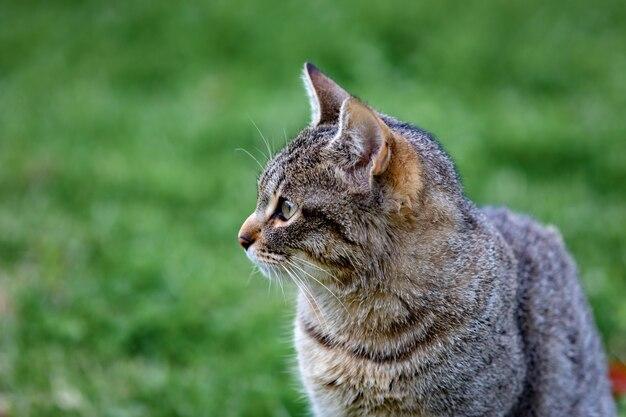 Beautiful grey cat enjoying in a park