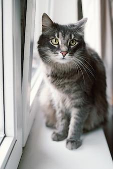 Красивый серый кот сидит на подоконнике