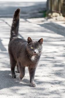 Красивый серый кот, идущий по дороге
