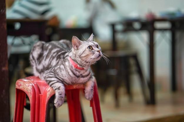 아름다운 회색 고양이