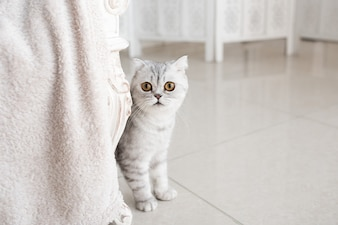 Beautiful grey tabby cat with yellow eyes stands on white floor