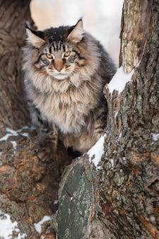 Красивая гтея кошка гуляет в лесу зимой
