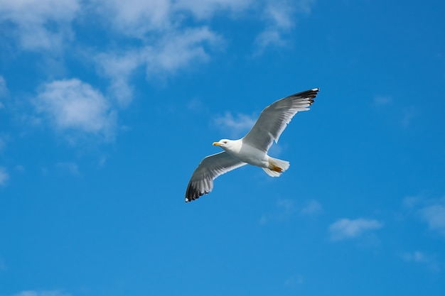 Beautiful gull with sky background