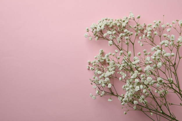Beautiful gypsophila flowers on pink background
