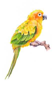 Beautiful hand painted watercolor bird parrot on paper.