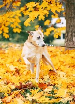 美しい幸せな面白い犬が遊んでいて、屋外で楽しんでいます