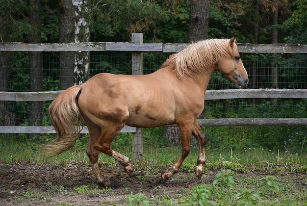 美しい馬具は自然の中で楽しんでいます
