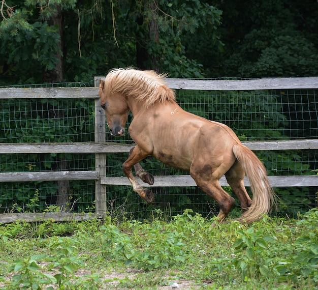 美しい馬具馬が自然の中でジャンプしています。
