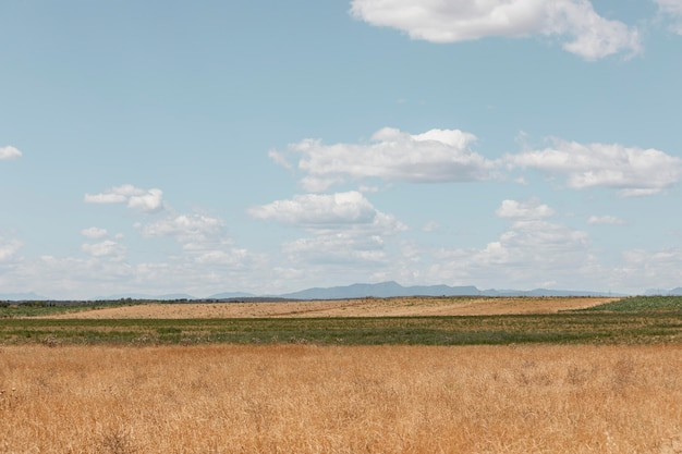 시골 쪽의 아름다운 건초밭